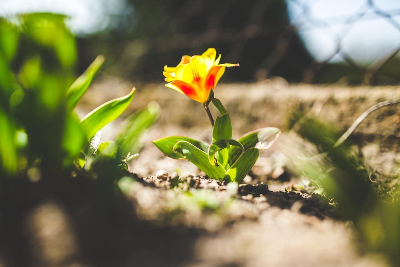 yellow-spring-flower-closeup-6447